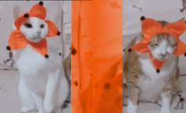 Fun Cat Lame Cat Partner Quiz. Which cat have you matched up with?
